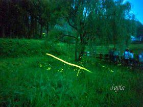 ゲンジとヘイケの蛍が乱舞!群馬県・箱島ホタル第一保護地で天然のホタルを見よう!|群馬県|トラベルjp<たびねす>