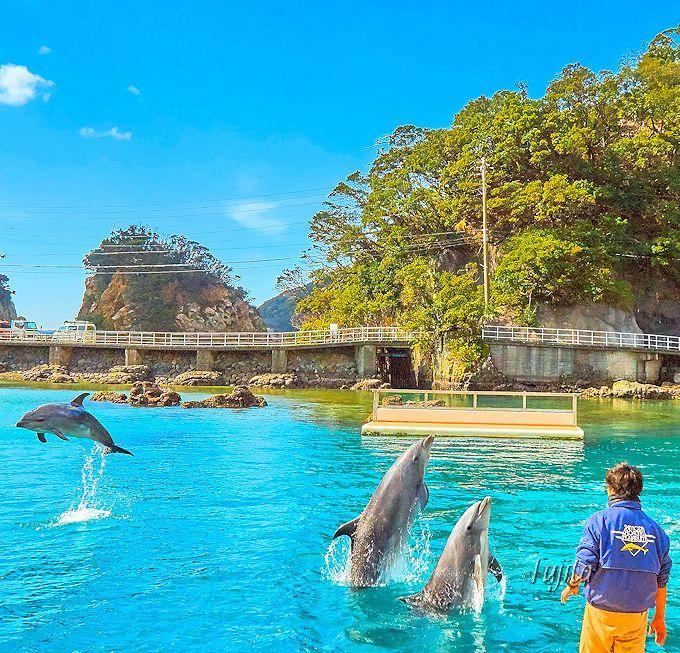 ファミリーでの観光に特におすすめ!「下田海中水族館」