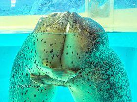 本当にキュートな海洋生物たち!!伊豆・下田海中水族館は「めちゃ可愛い」がいっぱい!