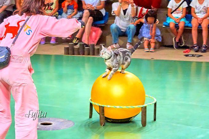 ニャンと猫が曲芸しちゃう!「那須どうぶつ王国」は人気のカピバラ・アルパカも触り放題
