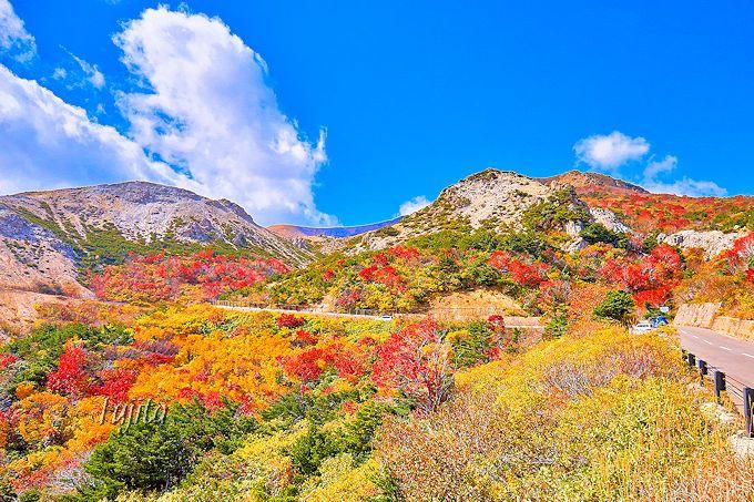 「天狗の庭」の紅葉は最上部も絶景!