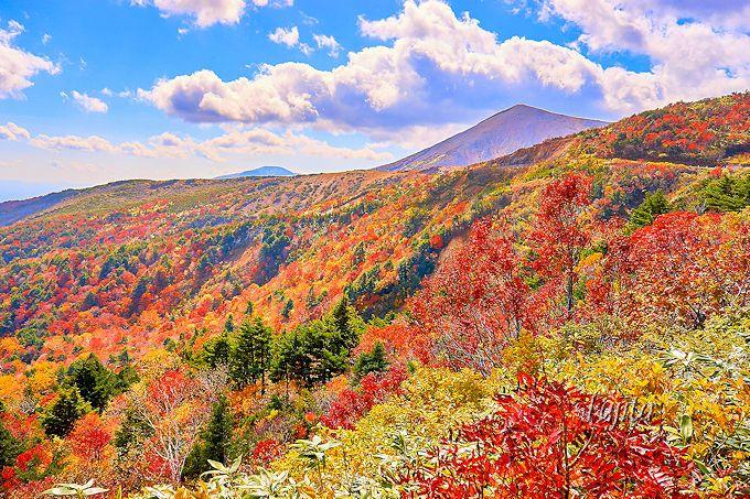 磐梯吾妻スカイライン「天狗の庭」は山肌の紅葉が絶景!