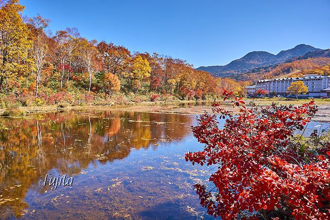 蓮池の水面に紅葉が映り絶景!