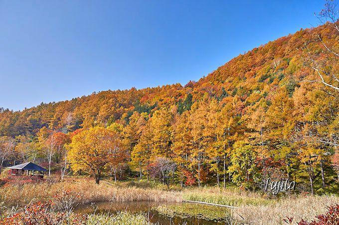 草津の紅葉は黄金色!鬼の相撲場は「西の河原公園」の最上部