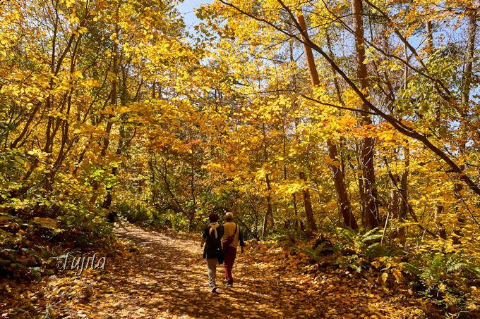同じ道を戻っても紅葉の美しさに感動!五色沼自然探勝路
