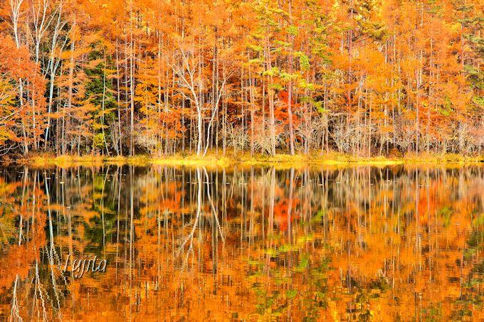 御射鹿池の紅葉は水面に映して眺めよう!