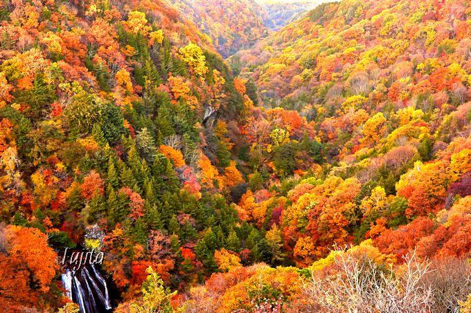 横谷峡の紅葉と王滝を一望!蓼科の絶景スポット「横谷観音展望台」