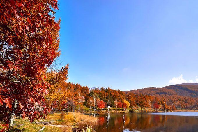 意外と穴場?紅葉が断然美しい女神湖もおすすめ!