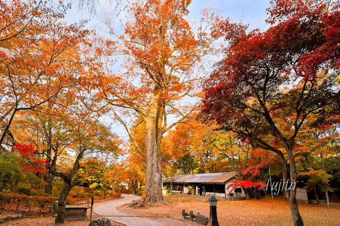 懐古園で5色の紅葉を楽しもう!
