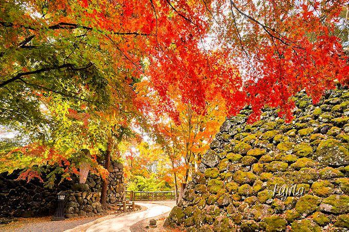 懐古園を代表する紅葉スポット「紅葉ケ丘」