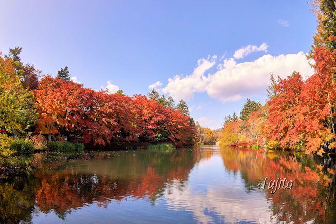 太陽に照らされ紅葉が光り輝く!軽井沢「雲場池」は晴天に行こう