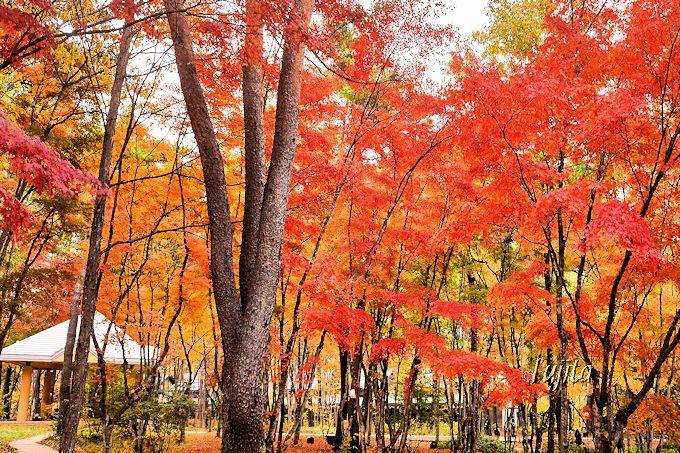 雲場池の次は中軽井沢へ!軽井沢高原教会の紅葉もおすすめ