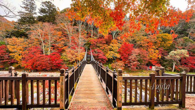 紅の吊橋を渡って「もみじの湯」へ行こう!
