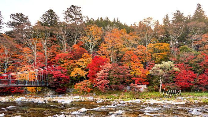 塩原温泉「もみじの湯」の紅葉は対岸から眺めても絶景!