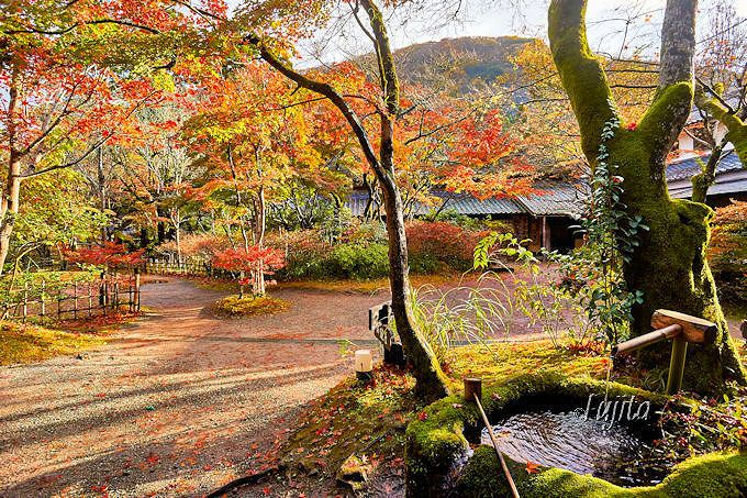 湯布院「亀の井別荘」の紅葉は早朝から楽しもう!