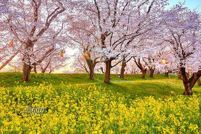 桜の絶景が圏央道沿いに集結!埼玉県の花見名所ベスト5