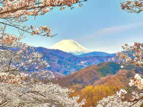桜と富士山のコラボが絶景!山梨「大法師公園」は八ヶ岳も一望の花見名所|山梨県|トラベルjp<たびねす>
