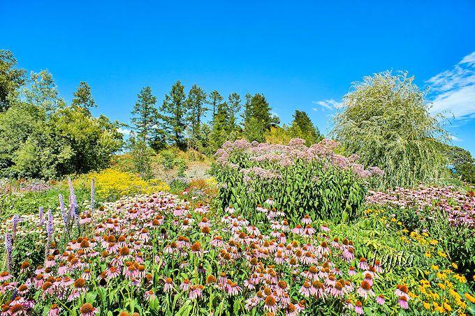 上野ファーム自慢の「ノームの庭」は想像以上の絶景!