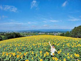 SNS映え抜群!500万本のひまわり畑で「いいね!」が貰える写真撮影~北海道名寄市~|北海道|トラベルjp<たびねす>