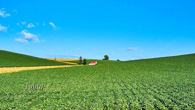 「ラ・マルタ」の圧倒的コスパを実現する美瑛の農産物!