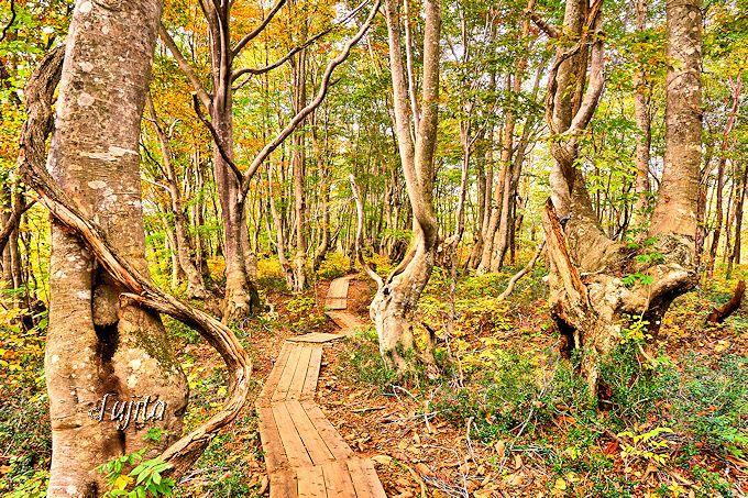 紅葉の奇形巨木群が次第に擬人化!?目を疑う幻想的な光景
