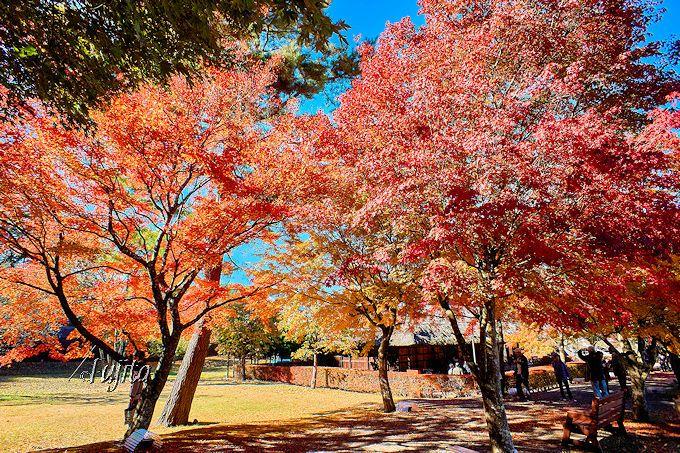 旧武藤家住宅周辺の紅葉が一番絶景!