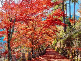 桜名所は紅葉も絶景!吉野山・奥千本「高城山展望台」で紅葉狩り