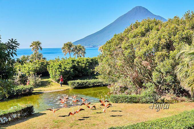 まるで海外!指宿・長崎鼻パーキングガーデンは、開聞岳と亜熱帯植物が絶景