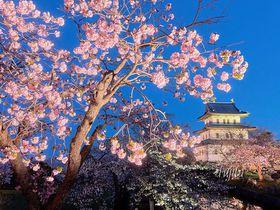 松前城とのコラボが絶景!北海道・松前公園の夜桜ライトアップ