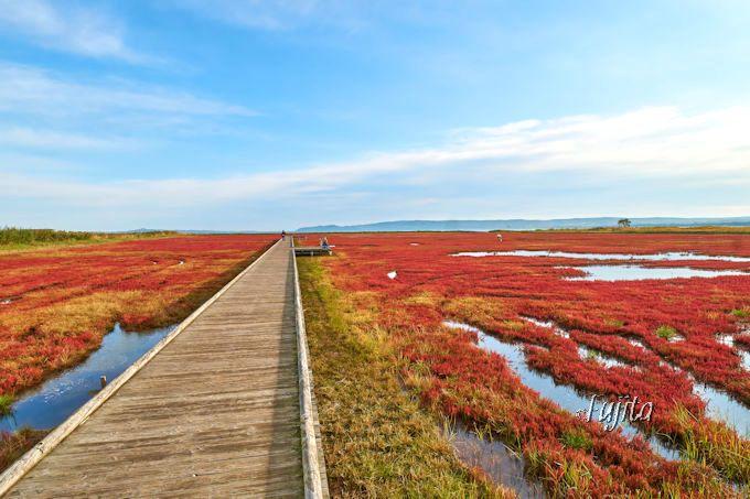 能取湖サンゴ草群落の紅葉が絶景!網走・能取岬はCMロケ地