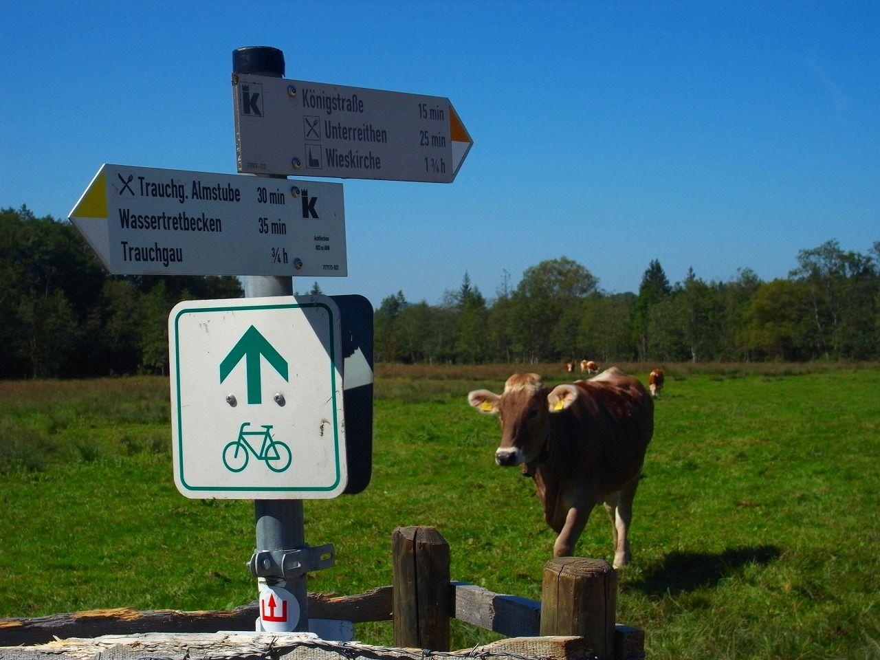 トラウヒガウ村周辺では森や牧場を走ることも……