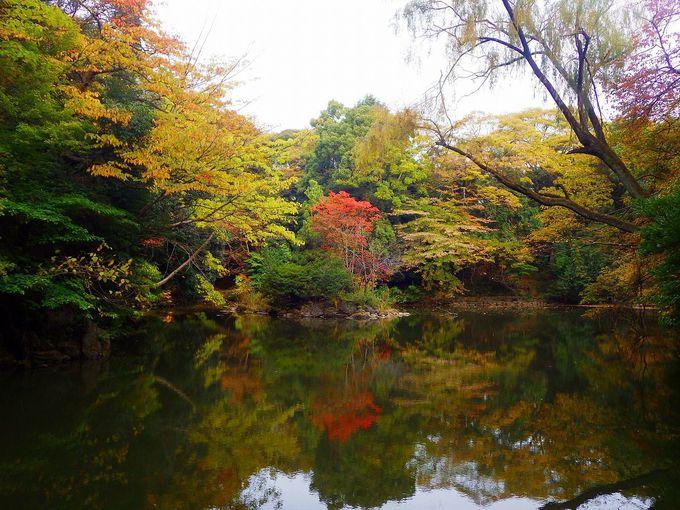 秋深まる池に佇む 〜三四郎池とその周辺〜