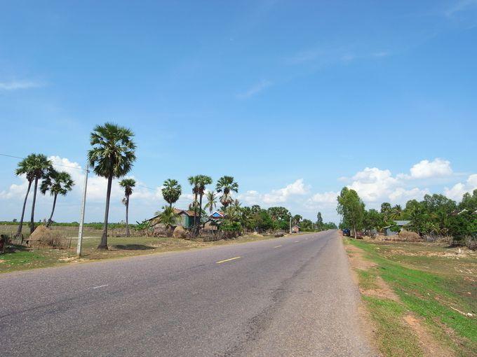ヤシの木が広がる平原、そして地平線まで続く道