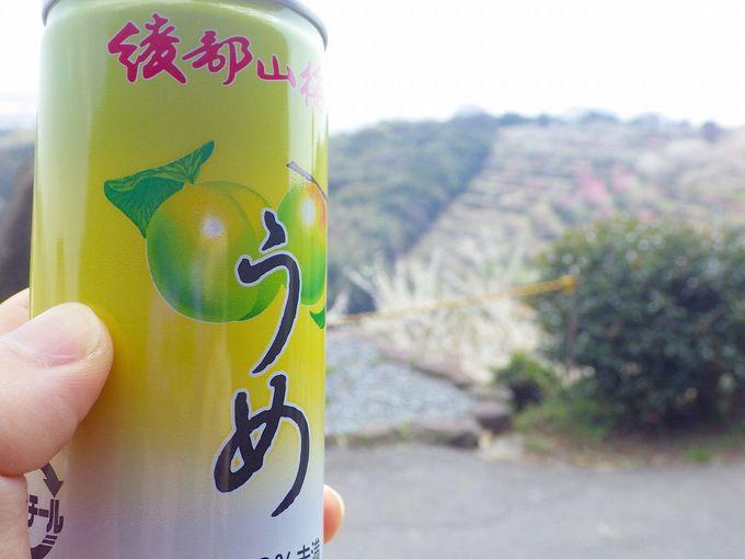 予想以上の美味しさ!綾部山梅林、梅ジュース!