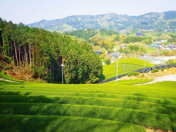 町全体が茶畑!忘れられない美しい風景を探しに行こう