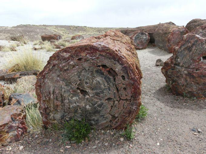 そして化石の森へ・・・