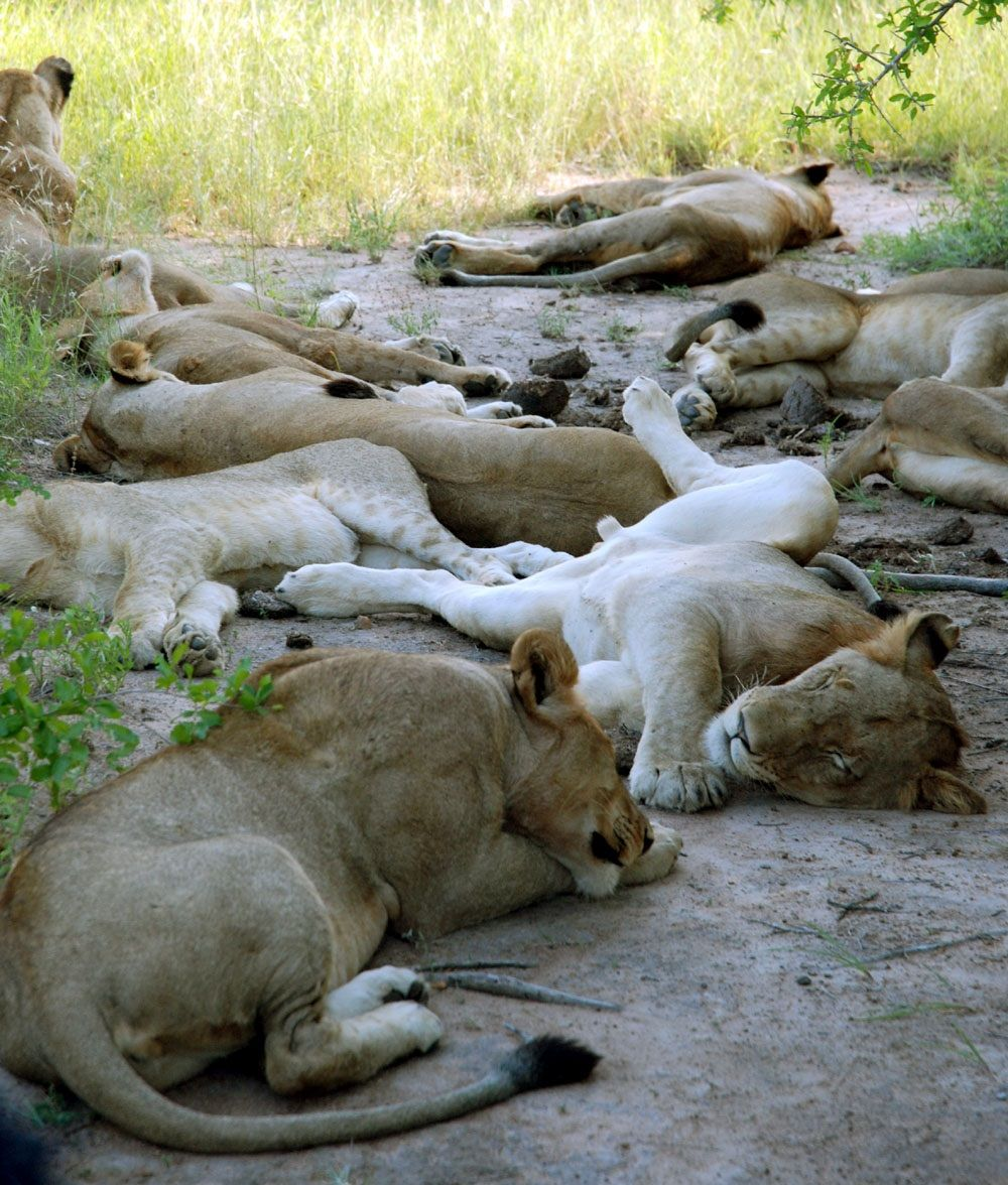 多くの野生動物に間近で出会える、クルーガー国立公園