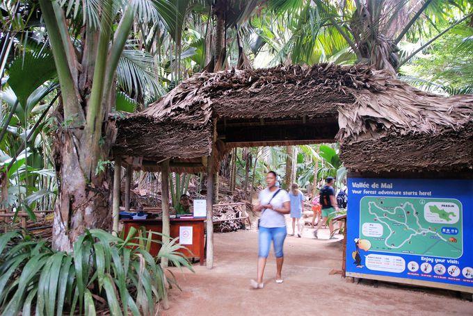 インド洋に浮かぶ神秘の森、ヴァレ・ド・メ自然保護区