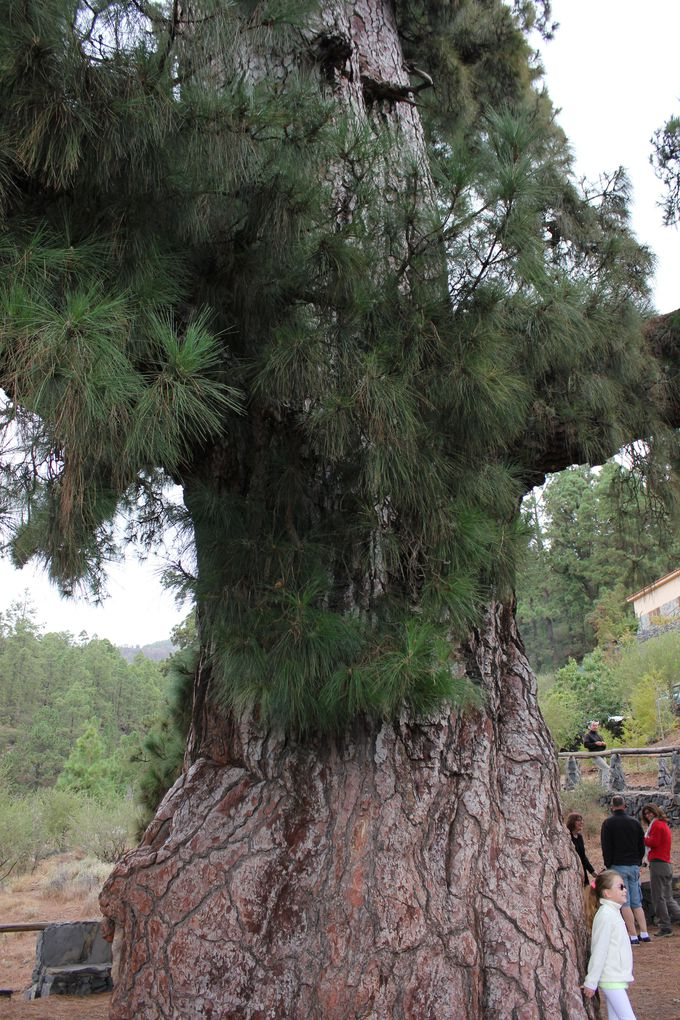 国立公園入り口の巨大樹を眺めながらひと休憩