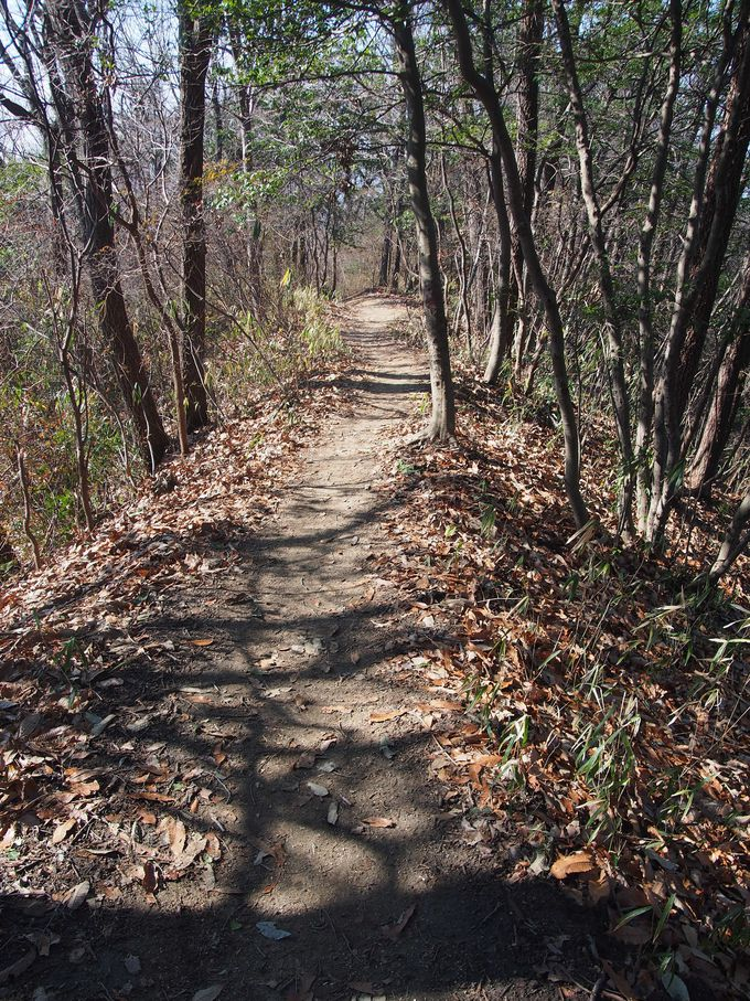 細く一本道の南側登山道