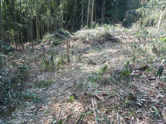 竹林に石垣を残すばかり「豊臣秀次居館址」