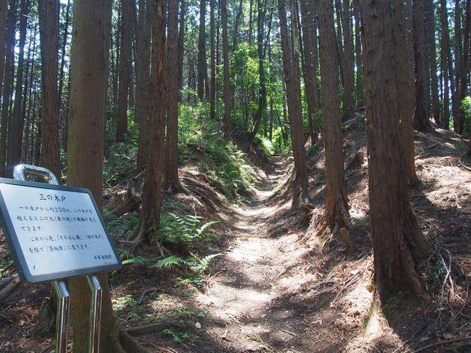 中世山城の技巧も見える楠木本城「上赤坂城」