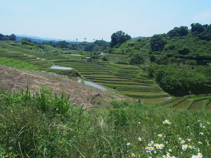 棚田を見下ろす正成蜂起の聖地「下赤坂城」