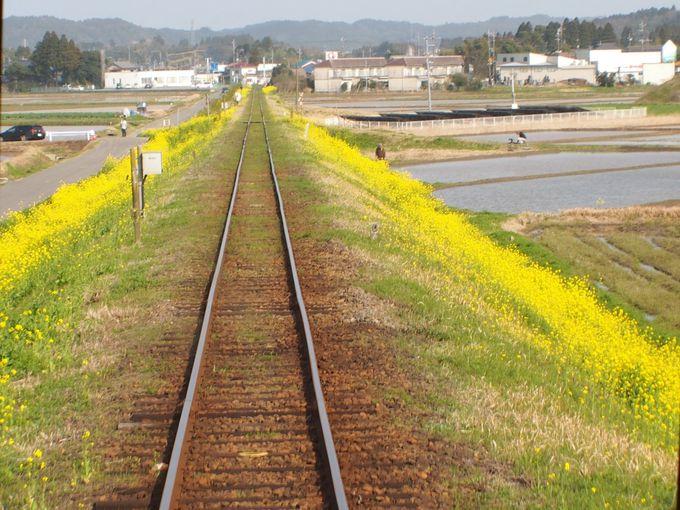 菜の花色したムーミン列車に乗って帰ろう
