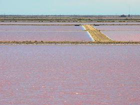 自然の神秘!ピンクに輝くフランス「カマルグ塩田」