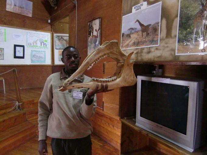 キリンの骨って、とっても重い!