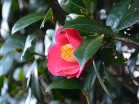 椿のシーズンで鮮やかな伊豆大島!身体の中から潤う旅のススメ