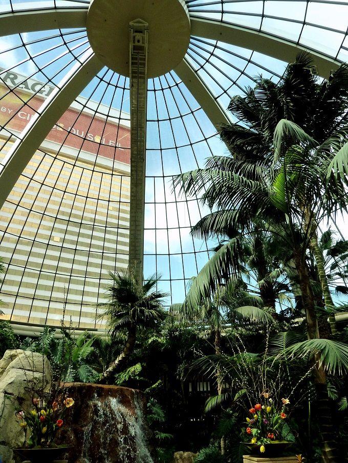 エキゾチックな植物園「アトリウム」は、まるでジャングル!