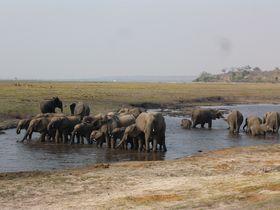 野生動物をこんな近くで!サファリの本場ボツワナ チョベ国立公園ガイド