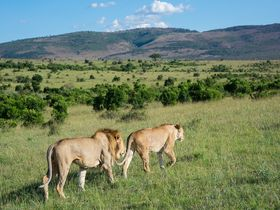 東アフリカが誇る野生動物の楽園、マサイマラ国立保護区へ!